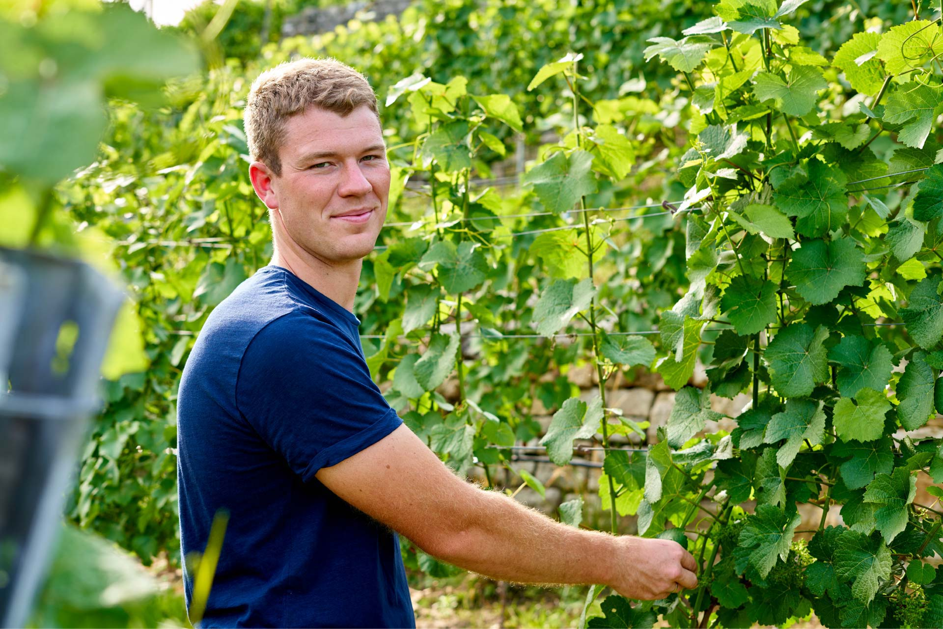 Wein von Felix Velte – So schmeckt Heimat